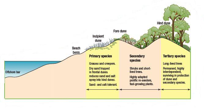 geography coursework in sand dunes