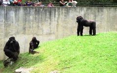 1992.07.06-103.11 la famille gorille