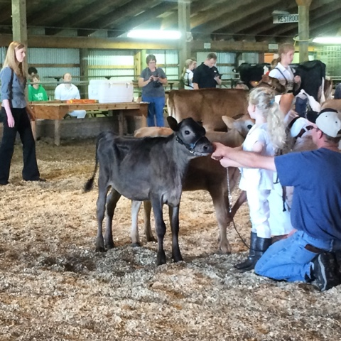 Central Minnesota Youth Dairy Days Show