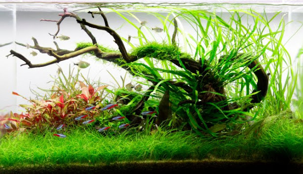 Image of A good planted aquarium environment