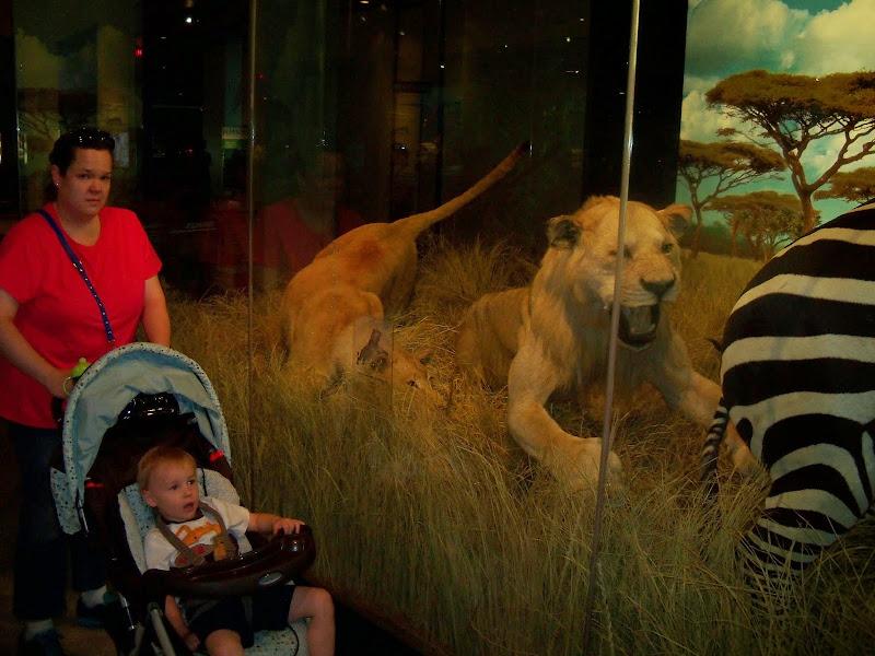 Houston Museum of Natural Science - 116_2773.JPG