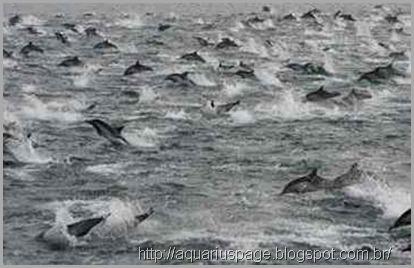 golfinhos-misterio-california