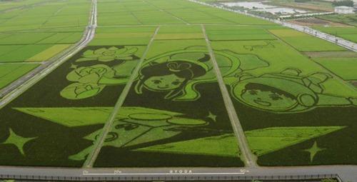 Plantação de arroz no Japão