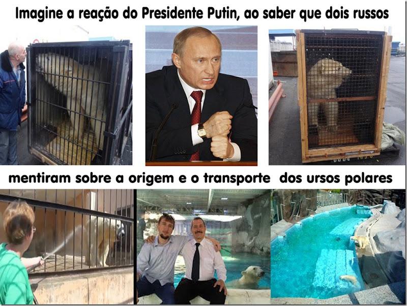 putin-polarbears