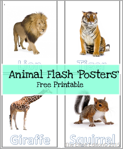 Animal Flash Poster picture