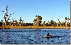 Dolphin where the River meets the Gulf