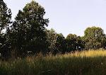 Forest near Meadowside Nature Center, Rock Creek Park, Rockville, Maryland.