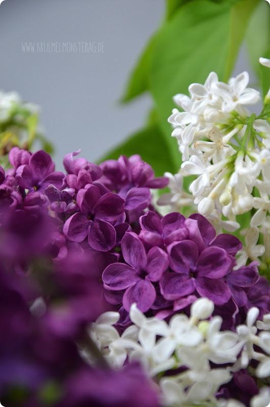 Flieder (05) in lila, flieder und weiß aus dem Garten