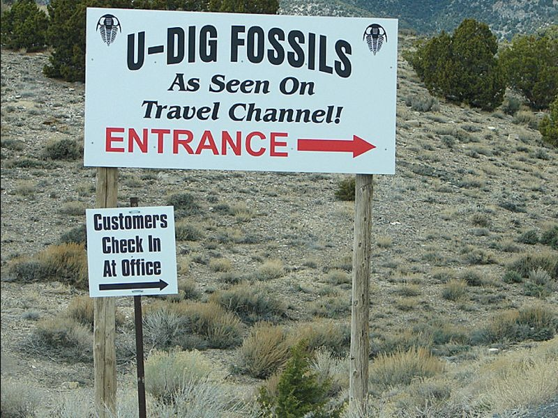 fossils-quarry-5