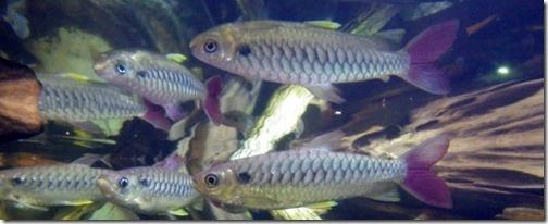 Tucan fish. Shedd Aquarium, Chicago.