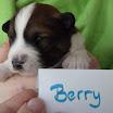 Berry 23-05 2.jpg