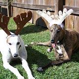GreyhoundReindeer.jpg