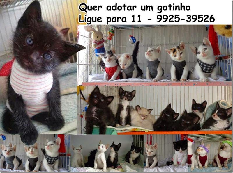 adotar_gatinhos