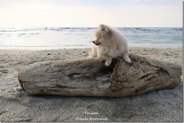 小琉球威尼斯海灘 (3)