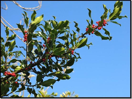 0122berries