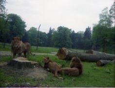 1980.05.25-006.09 lions