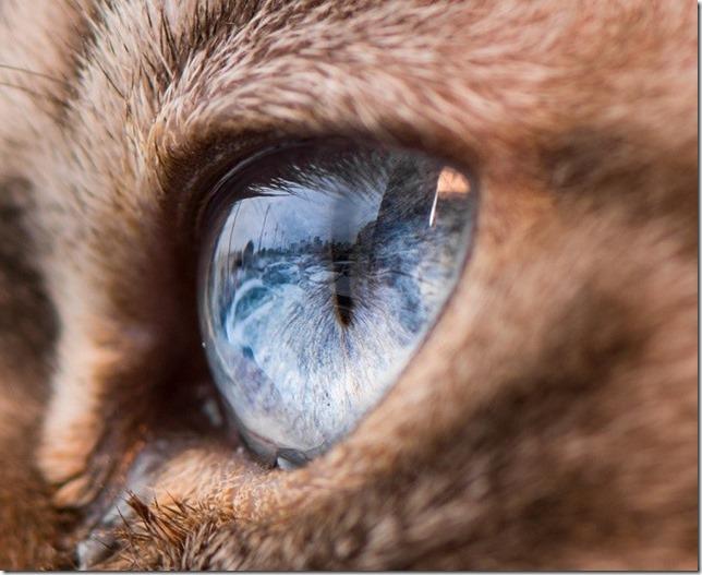 Cats Eyes1