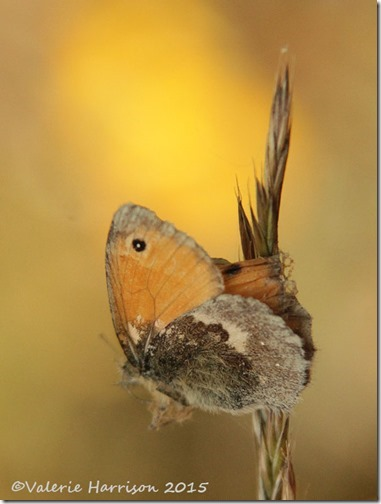 7-small-heath