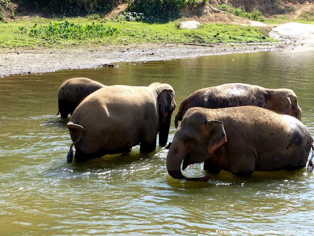 elefantes-tailandia.JPG