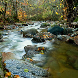 by Siniša Almaši - Nature Up Close Water ( water, up close, stream, forest, landscape, depth, colours, nature, autumn, cascade, trees, view, stones, rocks, light, river )