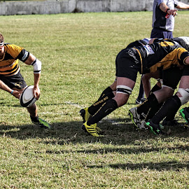 LRU 67 by Michael Moore - Sports & Fitness Rugby