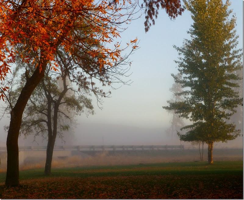 fog 014