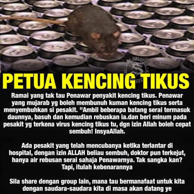 Punca penyakit kencing tikus dan petua kencing tikus !