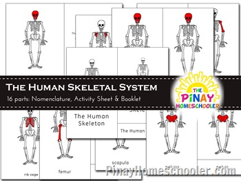 The Skeletal System Nomenclature and Definition Cards