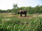 Elephants at the Nashville Zoo 09032011d