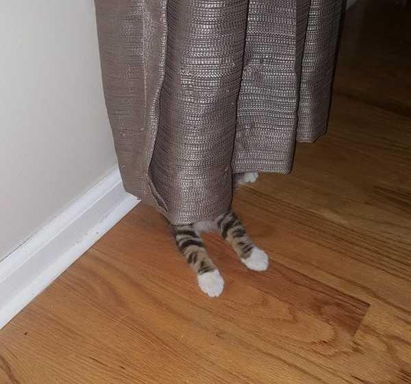 Os gatos não são muito bons em esconde-esconde 1
