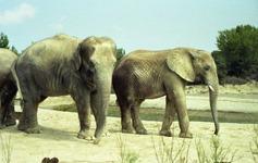 1991.08.24-098.20 éléphants