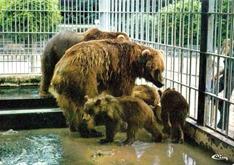 montevran ours