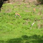 The Kilimanjaro Safari in Africa in the Animal Kingdom in Disney 06092011n