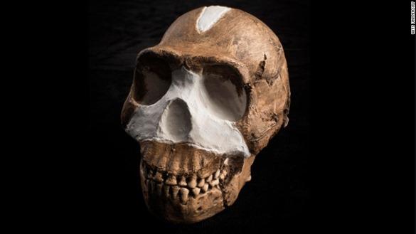 جمجمة الهومو ناليدي