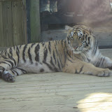 TIGERS Preservation Station - Myrtle Beach - 040510 - 19