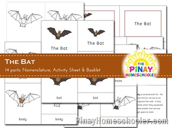 The Bat Nomenclature Cards