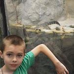Carolina Aquarium - 06072013 - 23