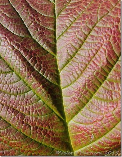 27-leaf