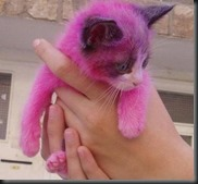 How exactly does a cat turn purple?