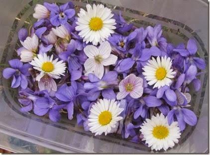 Veilchen-, Sauerklee-, Gänseblümchenblüten
