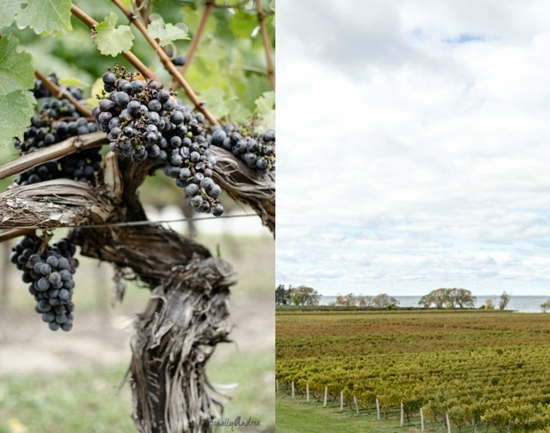How to Photograph Fall |  Vineyard and Grapes Diptych
