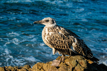 Seabird resting on the rocks