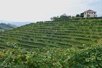 Weinbaugebiet um Valdobbiadene.