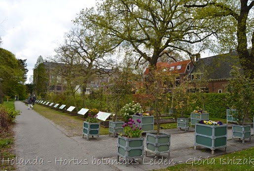 Glória Ishizaka - Hortus Botanicus Leiden - 10