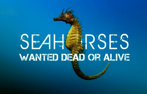 Koniki morskie na wagê z³ota / Seahorses Wanted Dead Or Alive (2010) PL.1080i.HDTV.x264 / Lektor PL