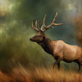 Bull Elk 3.jpg