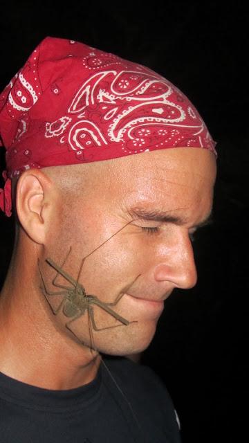A bizarre scorpion spider on Erik's face.