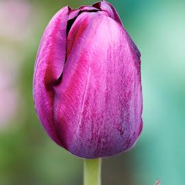 Flower 658~ by Raphael RaCcoon - Flowers Single Flower