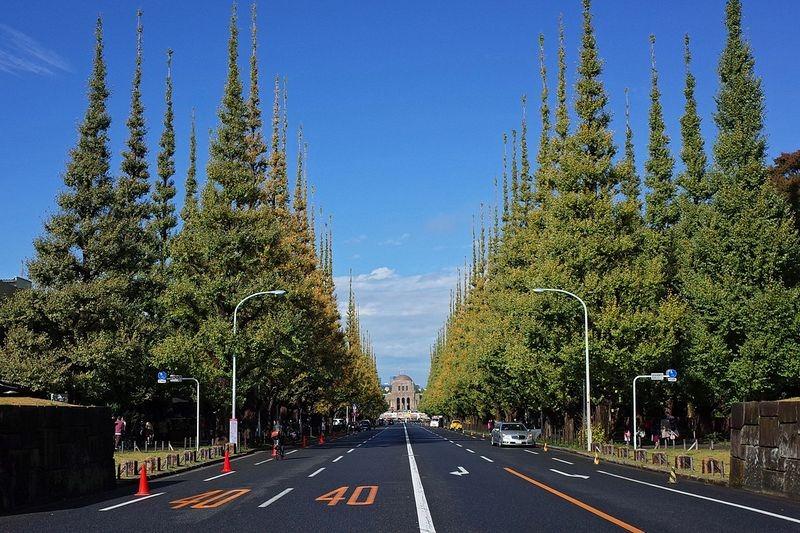 ginkgo-avenue-tokyo-8
