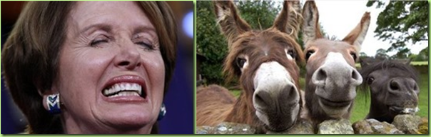 nancy and her donkeys